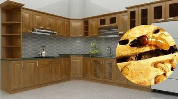 Cách chống mối mọt tủ bếp gỗ