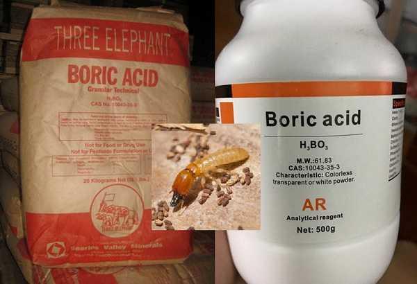 Sử dụng axit boric để xử lý mối mọt