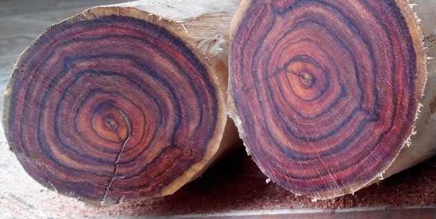 Đặc điểm, tác dụng và cách nhận biết gỗ sưa đỏ